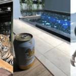 トラ、ビール、ゾウ